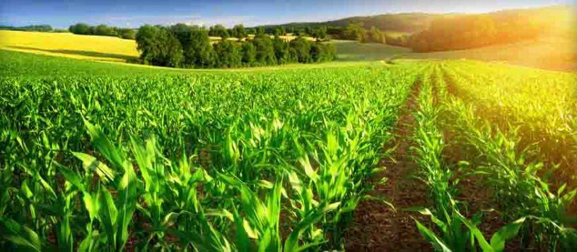 कृषि क्षेत्रमा बैंकको  २ खर्ब ७१ अर्ब रुपैयाँ लगानी