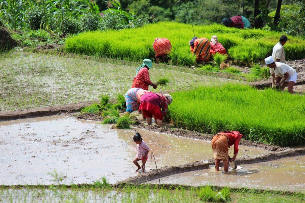 कृषिमा परनिर्भरता बढ्दैः २ खर्ब ९१ अर्ब रुपैयाँ बराबरको कृषिजन्य वस्तुको आयात