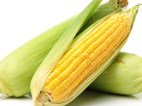 The benefits of green maize